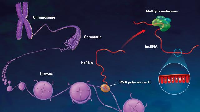 ניתן לשנות גנטיקה בעזרת אפיגנטיקה